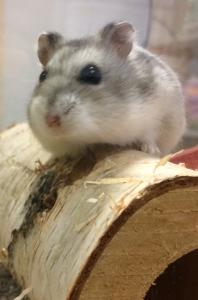 Supreme Petfoods_resident hamster Max 2